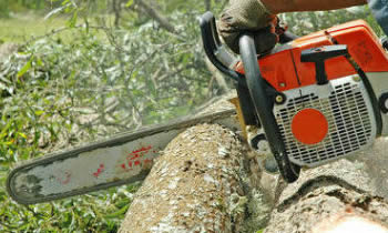 Tree Removal in Highland Park IL Tree Removal Quotes in Highland Park IL Tree Removal Estimates in Highland Park IL Tree Removal Services in Highland Park IL Tree Removal Professionals in Highland Park IL Tree Services in Highland Park IL