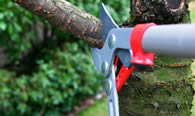 Tree Pruning Services in Highland Park IL