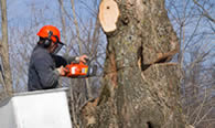 Tree Removal in Highland Park IL